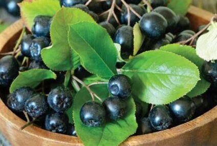 Aronia – fructele exotice miraculoase pentru sănătatea consumatorilor